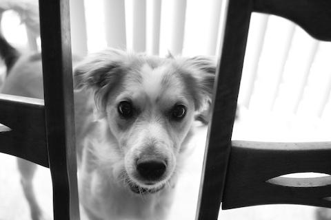 0705 dog George